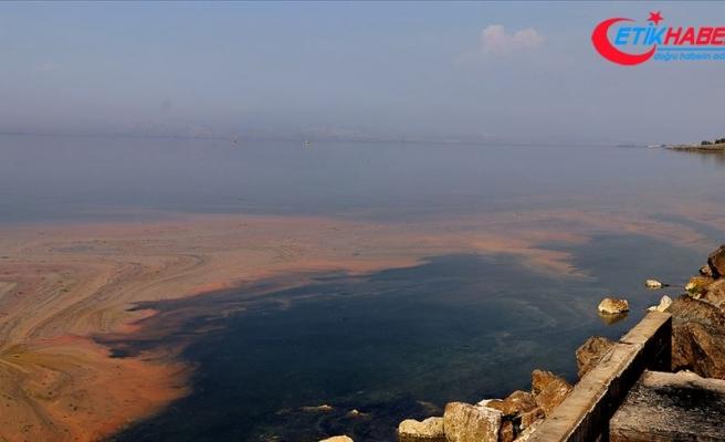 Planktonların çoğalmasıyla deniz kıyısı renklendi