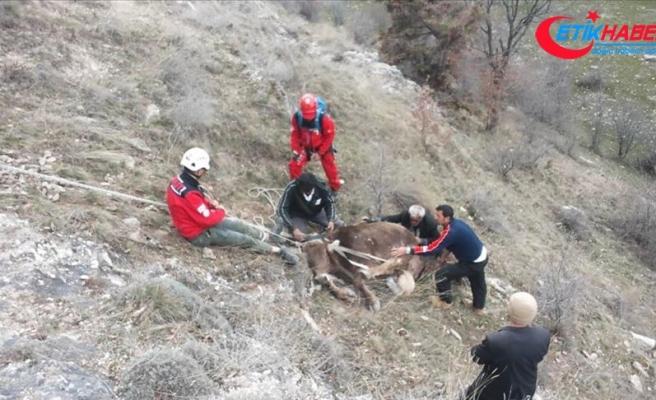 Uçurumdan yuvarlanan inekleri AKUT kurtardı