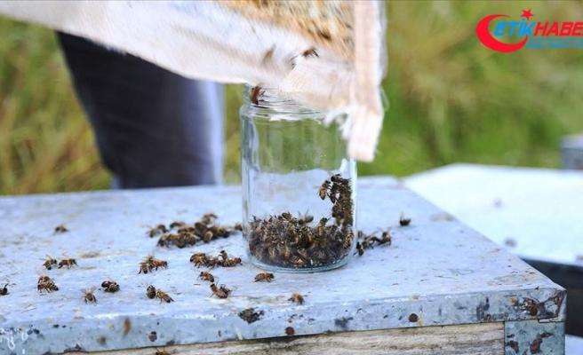 'Arı ölümleri zirai ilaçların gece kullanılmasıyla önlenebilir'