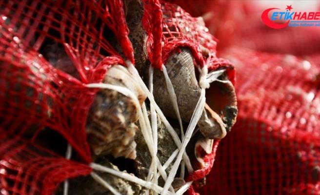 Balıkçılar yüzünü 'salyangoz'a döndü