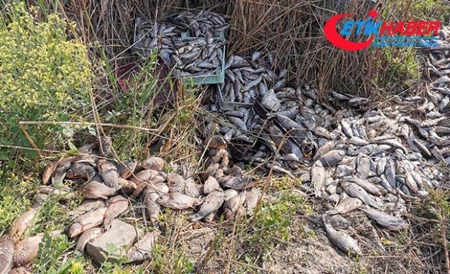 Bursa'da 1 ton balığı, piknik alanına bırakıp kaçtılar