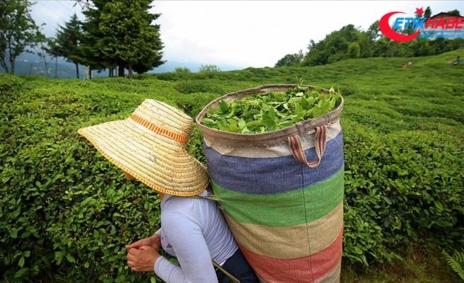 ÇAYKUR Ramazan Bayramı'nda da yaş çay alacak