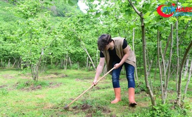 Fındıkta iyi tarım uygulamaları öğrenci ve çiftçilere öğretiliyor