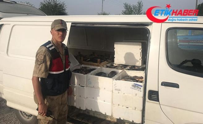 Kahramanmaraş'ta kaçak avlanan 1,2 ton balık ele geçirildi