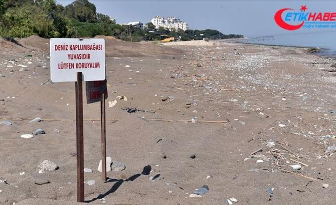 'Kumsala çıkan deniz kaplumbağalarını ürkütmeyin'