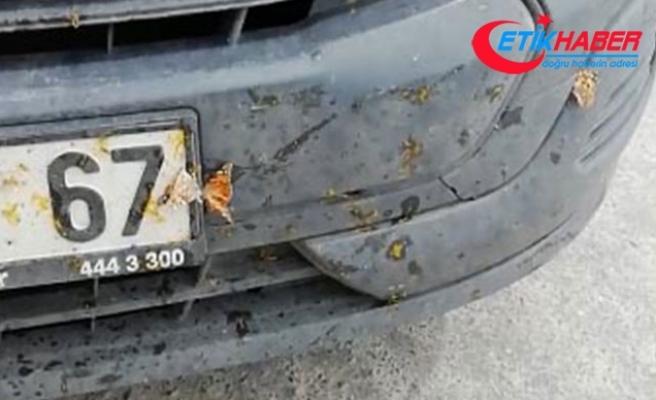 Samsun'da 'kelebek' istilası