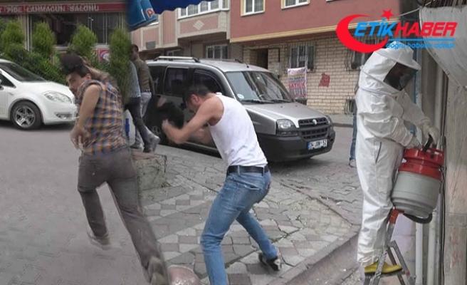 Sultangazi'de arı saldırısı paniği