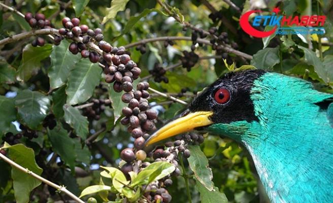 10 milyon hektar, 173 milyar dolar! Dünyanın en doğa ve kuş dostu kahvesini keşfetti