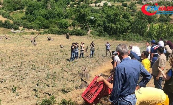 Balıkesir'de bin kınalı keklik doğaya salındı