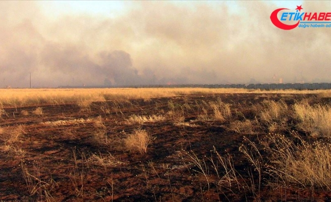 Birleşmiş Milletler: Suriye'de binlerce dönümlük ekili tarım arazisi yakıldı