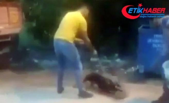 Kan donduran görüntü! Köpeğine, sokak kedisini parçalattı