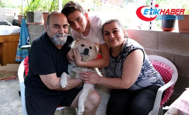Kayıp köpekleriyle kavuşma anı milyonlarca kez izlenen ailenin mutluluğu