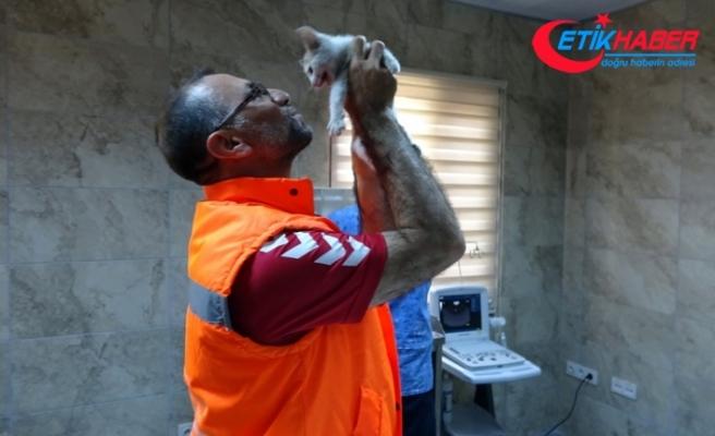 Kediyi suni teneffüsle hayata döndüren belediye işçisi o anları anlattı