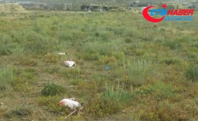 Konya'da 20 flamingo telef oldu