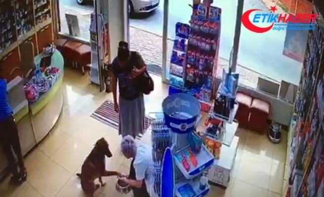 Yaralı köpek patisini kaldırarak eczacıdan adeta yardım istedi