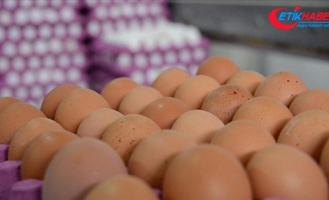 Hindistan'da iddia üzerine 41 yumurta yiyen kişi öldü