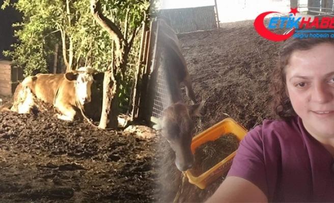 İneği ölümden kurtaran veteriner hekim hayatını kaybetti