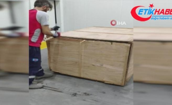 İstanbul havalimanı'nda 1 ton 217 kilogram Pangolin pul ele geçirildi