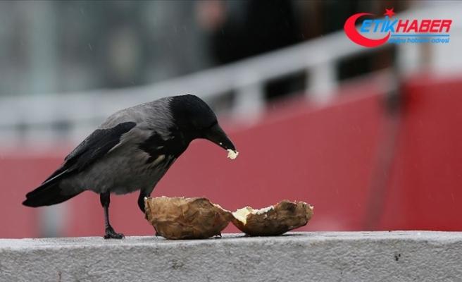Fast food kargaların da kolesterolünü artırdı