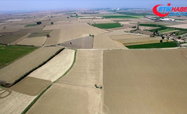 Hazineye ait tarım arazileri kullanıcılara satılacak