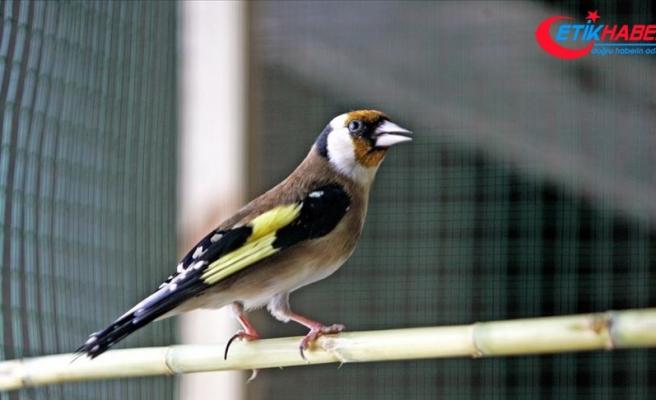 Saka kuşu yakalayanlara 81 bin 795 lira ceza