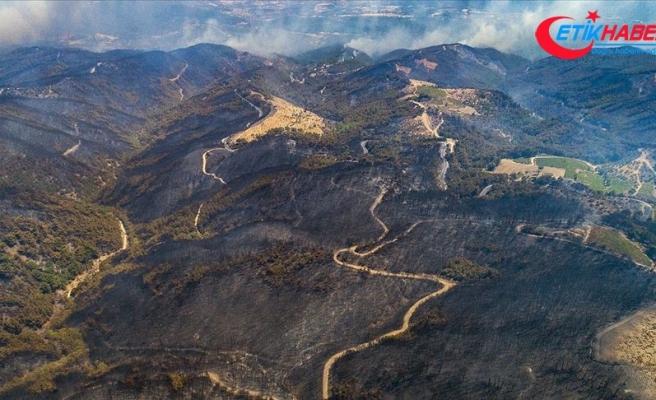 Bu yıl orman yangınlarında 5 bin hektar alan zarar gördü