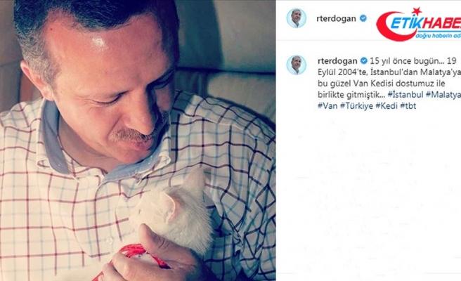 Cumhurbaşkanı Erdoğan'dan Van kedili 'tbt' paylaşımı