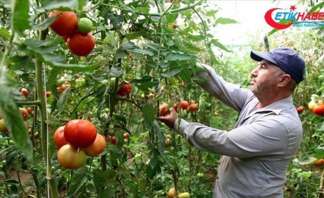 Ahıska Türkleri ekonomiye katkı sağlıyor
