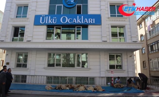 MHP Lideri Bahçeli'nin Talimatlarıyla Ülkü Ocakları Barış Pınarı Harekâtı Kapsamında Kurban Kesti!