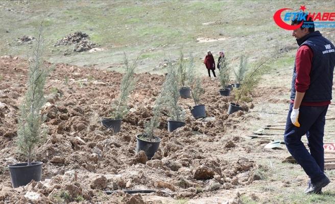 Bereket Ormanları Projesi ile 1 milyon 157 bin fidan toprakla buluştu