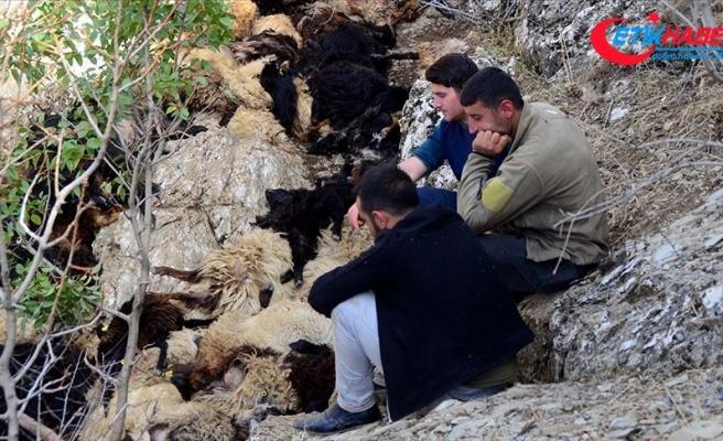 Bitlis'te uçurumdan düşen 315 koyun telef oldu