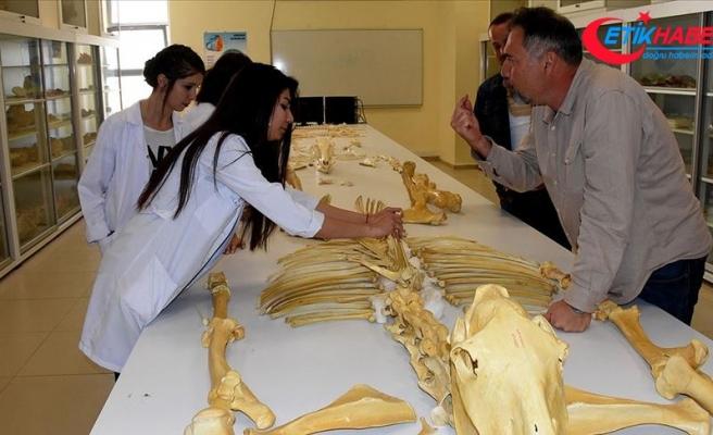 Kırşehir'de bulunan milyon yıllık fosiller dünya literatürüne kazandırılacak