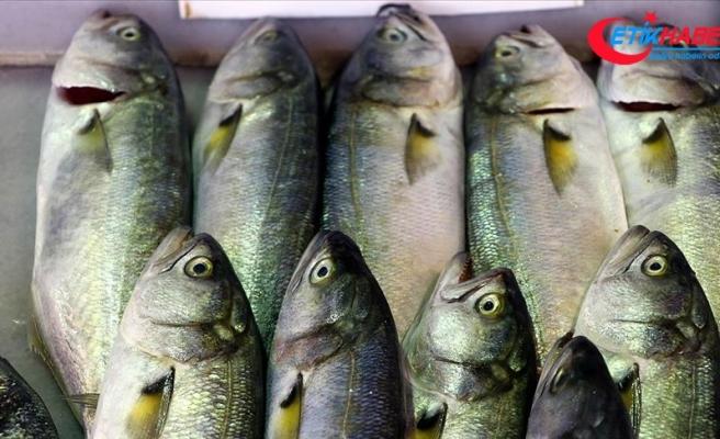 Lüfer Marmara'da balıkçının yüzünü güldürmeye başladı
