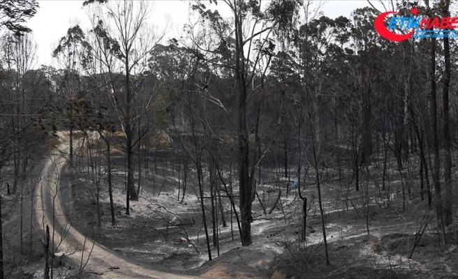 Avustralya'da yangından kaçan binlerce kişi deniz kenarlarına sığındı