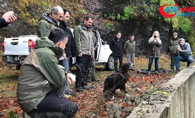 Bakan Pakdemirli tedavi edilen kara akbabayı doğaya saldı