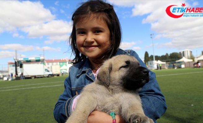 Çocukluğunu köpek beslenen evde geçirmek şizofreni riskini azaltabilir