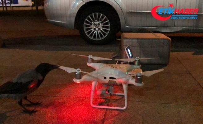 Karganın drone merakı renkli görüntülere sahne oldu