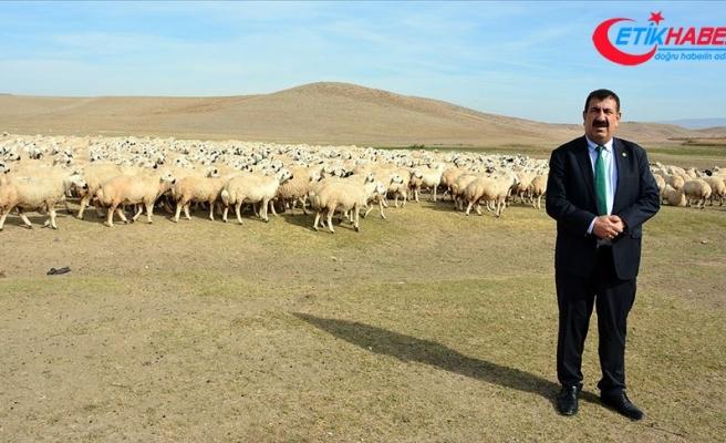TÜDKİYEB Başkanı Çelik: 2020 küçükbaş hayvancılıkta hamle yılı olacak