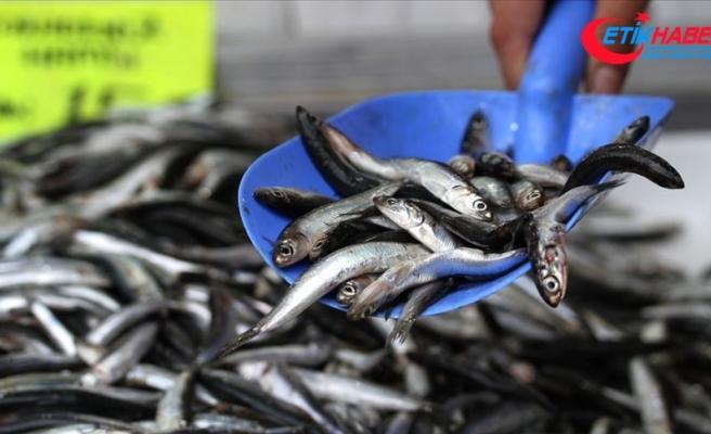 Karadeniz'de balıkçıların yüzünü hamsi güldürdü