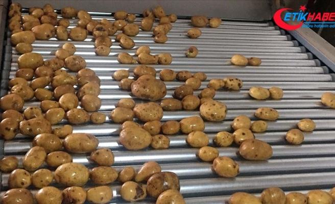 Kuru soğan ve patates ihracatı ön izne bağlandı