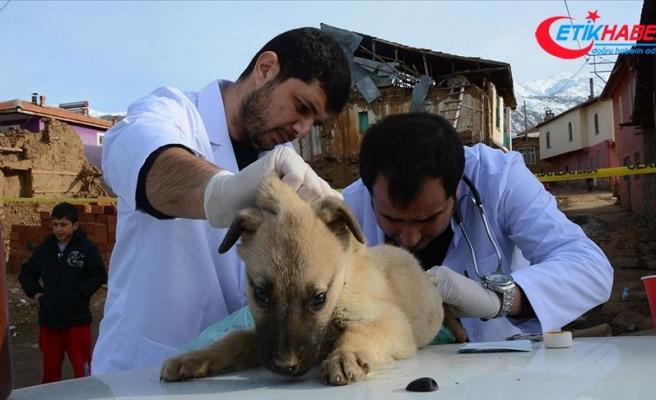 Malatya'da gönüllü veterinerler depremden etkilenen hayvanları tedavi etti