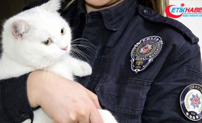 Sokakta yaralı bulunan kedi 'Miço' artık 'emniyet'te