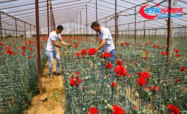 Anneler Günü çiçek üreticisine Kovid-19 sürecinde 'ilaç' gibi geldi