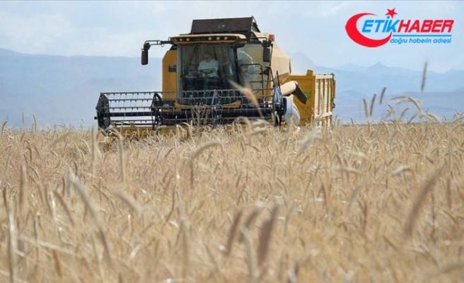 Buğdayda alım fiyatı açıklandı, gözler üretimde
