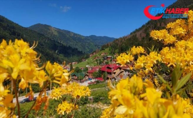 Doğu Karadeniz'in gözdesi Ayder Yaylası turizm sezonuna hazırlanıyor