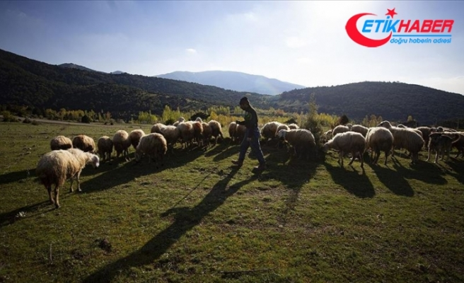 Ormanda yalnız yaşayan çobanın yüzü baharın gelişiyle güldü