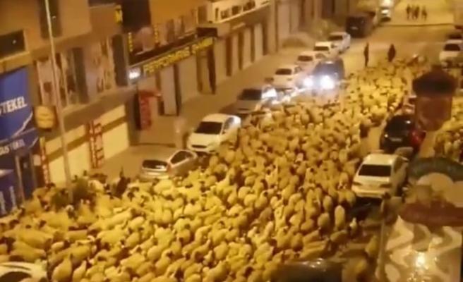 Şehir merkezinden geçen koyun sürüsü şaşkına çevirdi