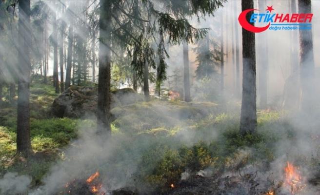 TikTok için hokkabazlık yaparken orman yangını çıkardı