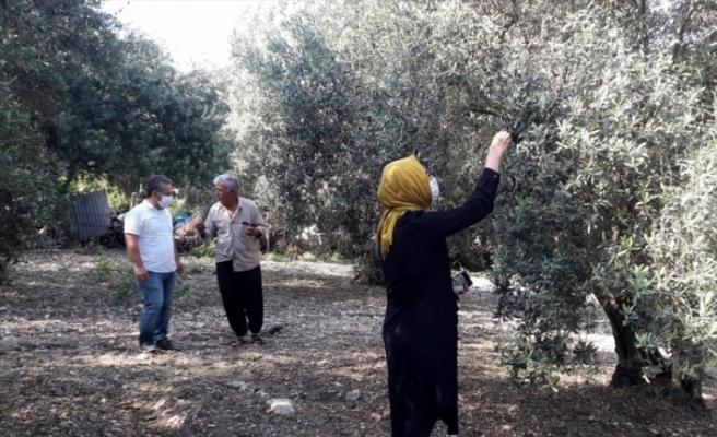 Osmaniye'de sağanak ve doludan zarar gören tarım arazilerinde hasar tespiti