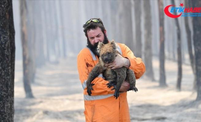 Avustralya'daki yangınlardan yaklaşık 3 milyar hayvan etkilendi